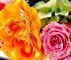 【プリザ】 結月-ゆづき-(ピンク) 【宅配100cmサイズ】