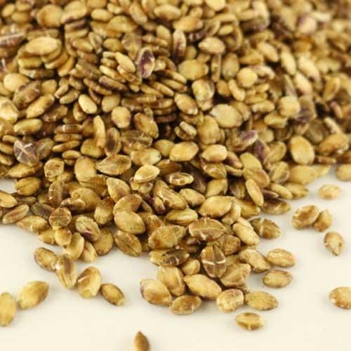 【農薬・化学肥料不使用】高野さんちの有機もち麦 200g