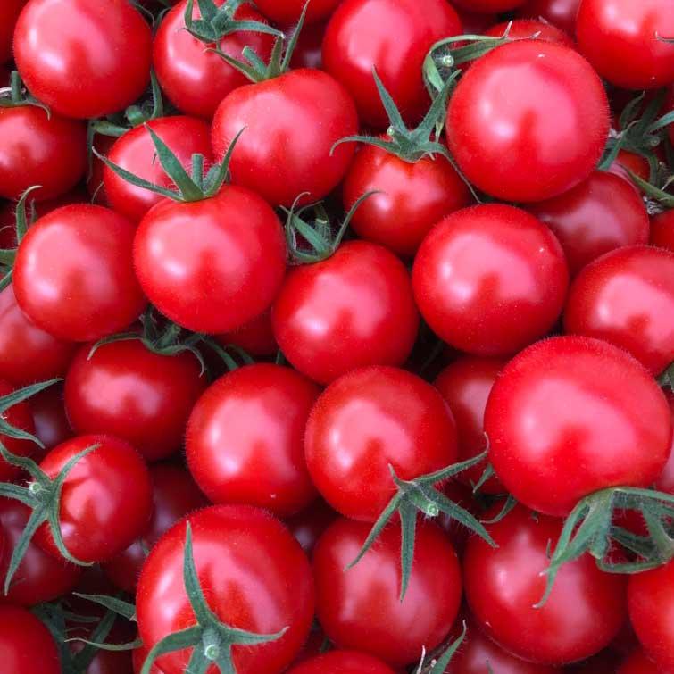 【産地直送/送料込】 山のふ元のあまトマト 3種 6Pセット