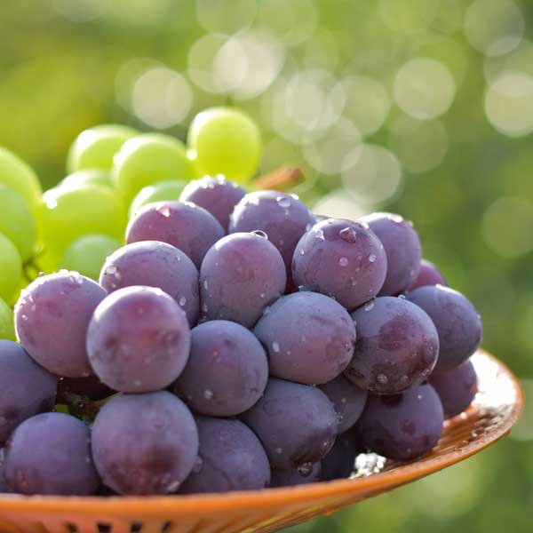 【産地直送/送料込】<フルーツのいとう園>duo de raisins(枝付き干しぶどう≪巨峰≫)