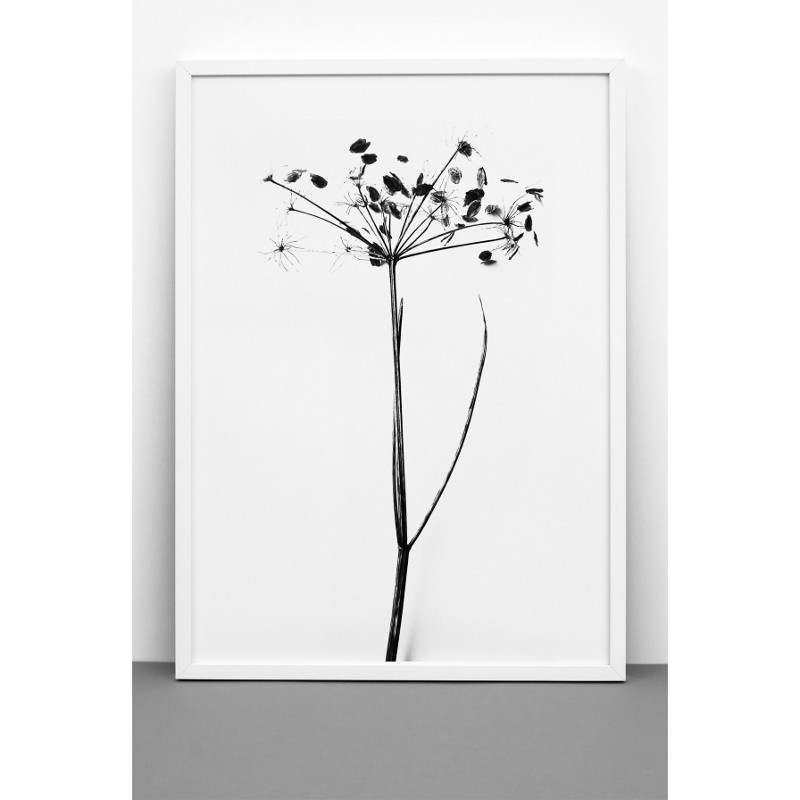 【復刻しました】ONE MUST DASH by nest ハナウド 花独活 アートポスター I DO I DO I DO 50x70cm