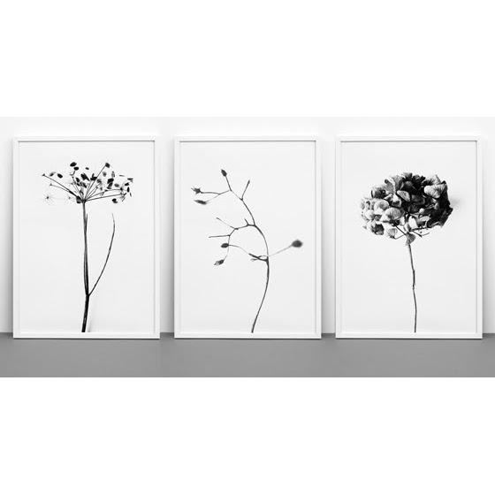 【復刻しました】ONE MUST DASH by nest 紫陽花 あじさい アートポスター HONEY HONEY 50x70cm