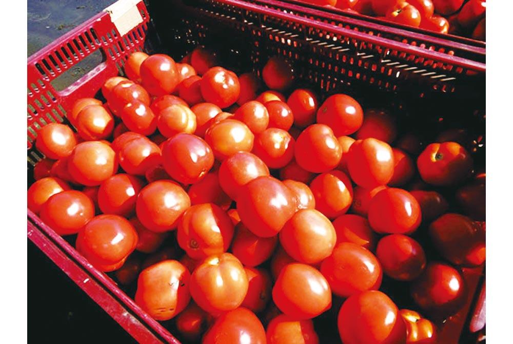 【恵庭市】余湖さん家のトマトジュース  20本入り