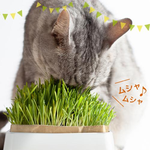 【HARIO】猫草栽培キット にゃんベジ