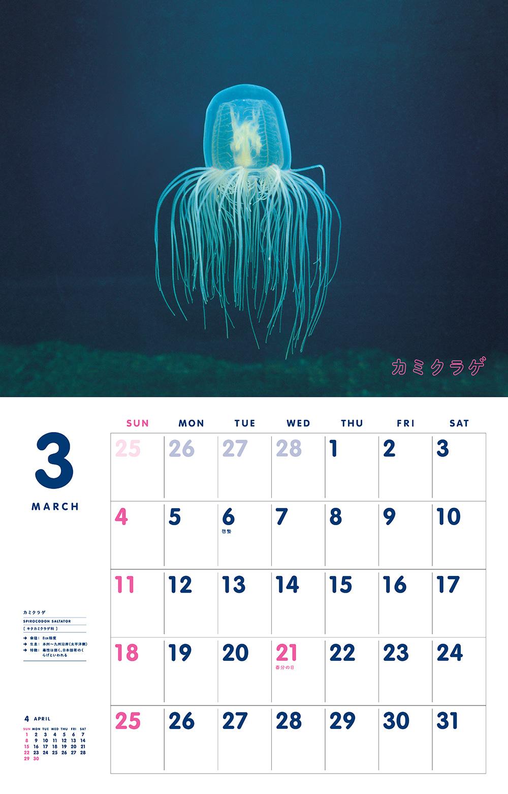 カレンダー2018 かわいいくらげ