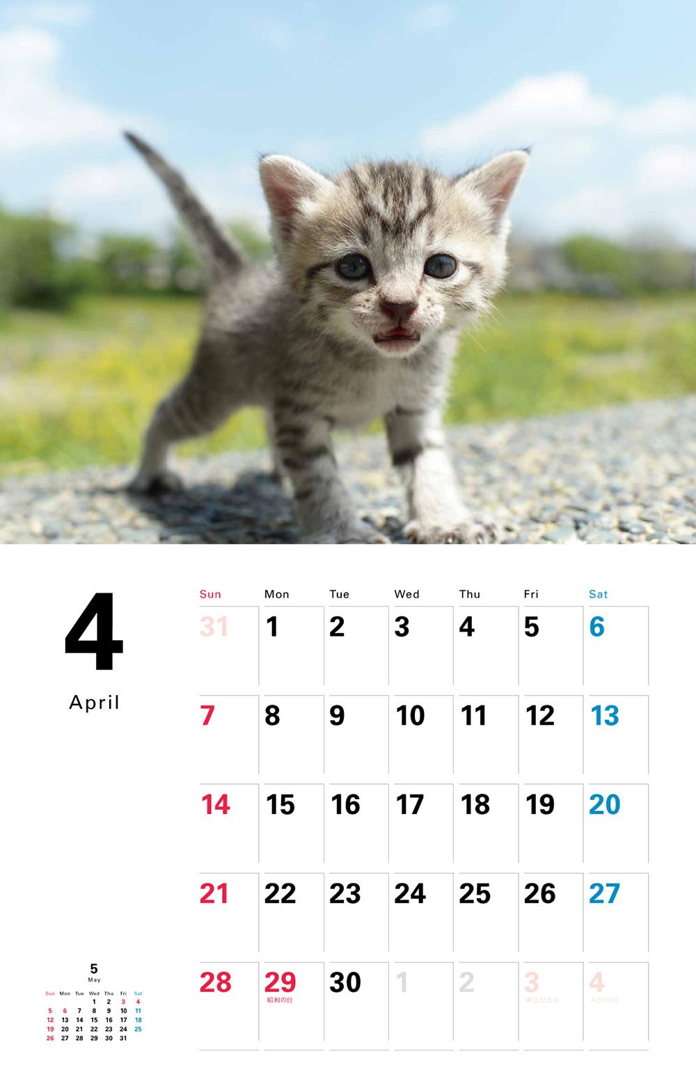 カレンダー2019 こねこ