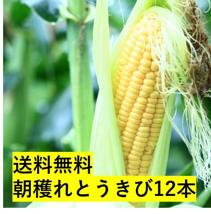 【送料無料】東神楽町朝穫れとうきび12本セット