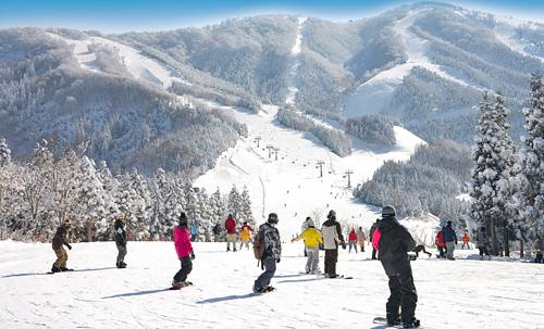 スキージャム勝山 早割1日券[小学生]