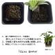 楽しい 寄せ植え コンシンネモデル Hシリーズ 304 半透明