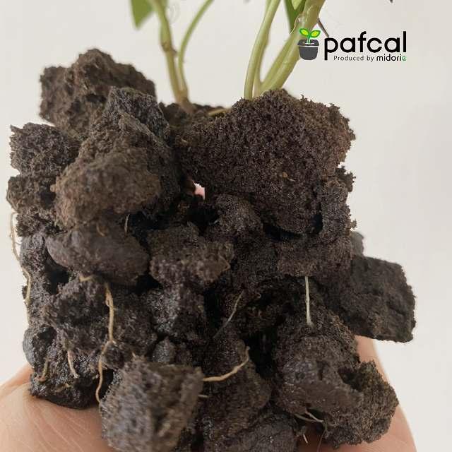 木製3苗ポット 3苗、パフカルソイル付き ナチュラルインテリア