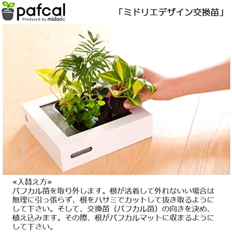テーブルヤシ モデル FRAME 20Y1 ホワイト
