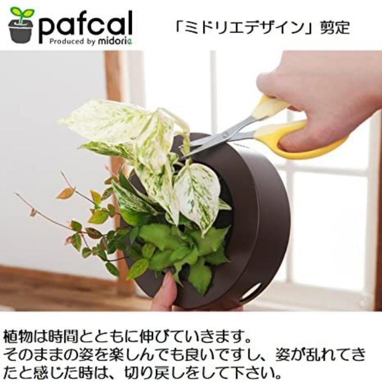 人気 3本パキラ モデル GREEN FRAME 21G ミルク