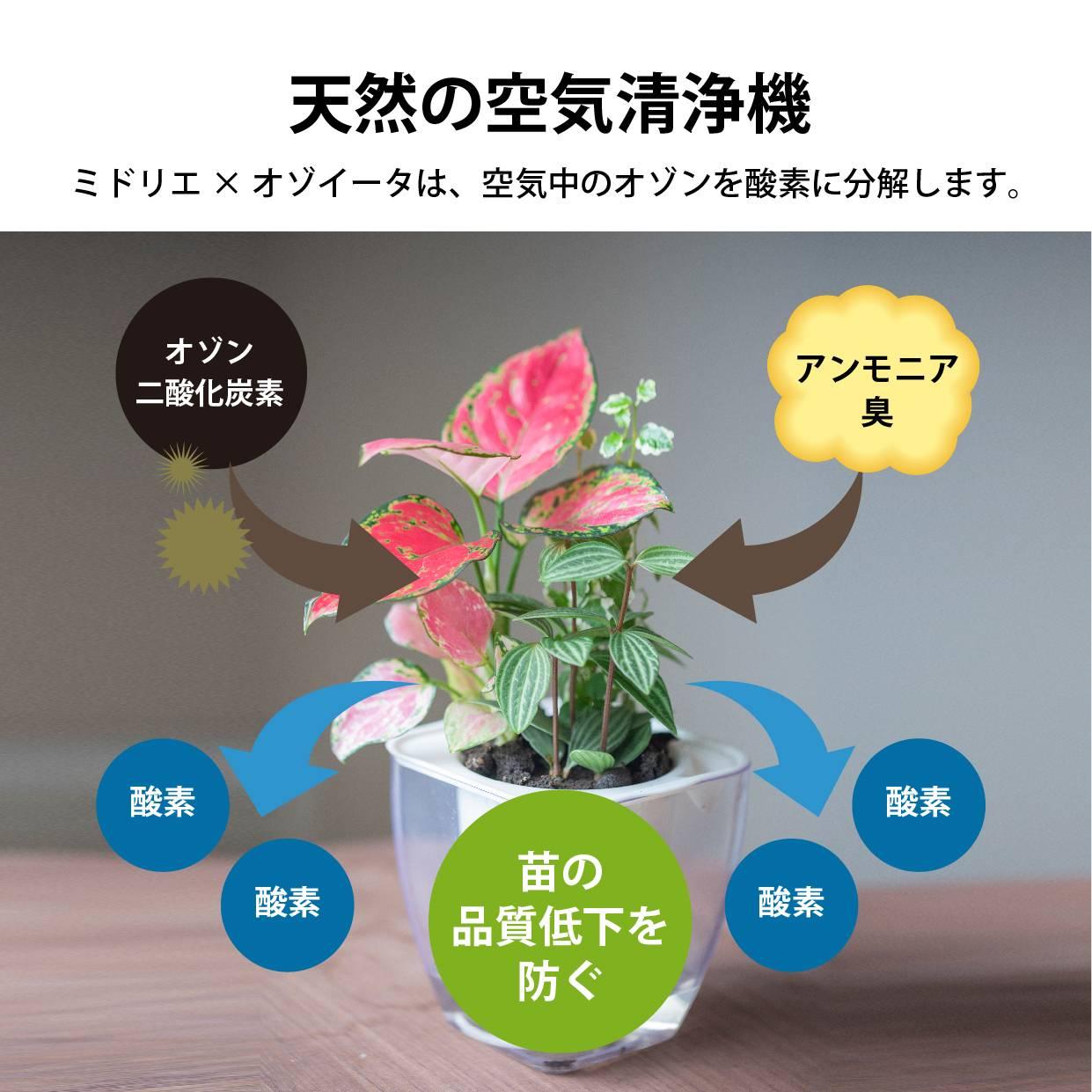 POT-J フィカス エラスティカ ティネケ  【家庭の空気を守る「オゾイータ」仕様】 (オゾイータシート付き)