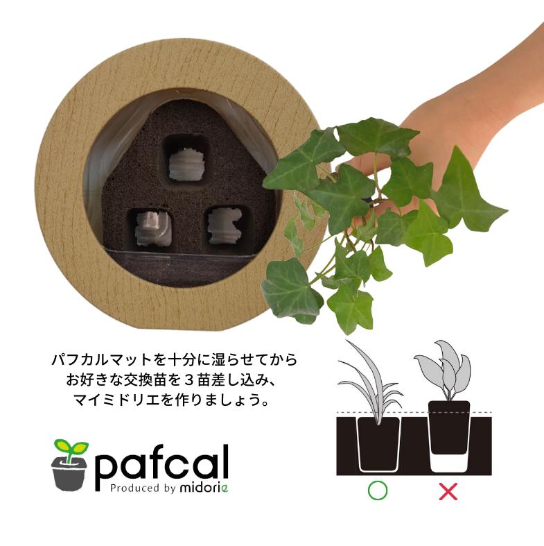 専用の交換苗と合わせて作る マイミドリエ GREEN FRAME (木目調 ナチュラル)
