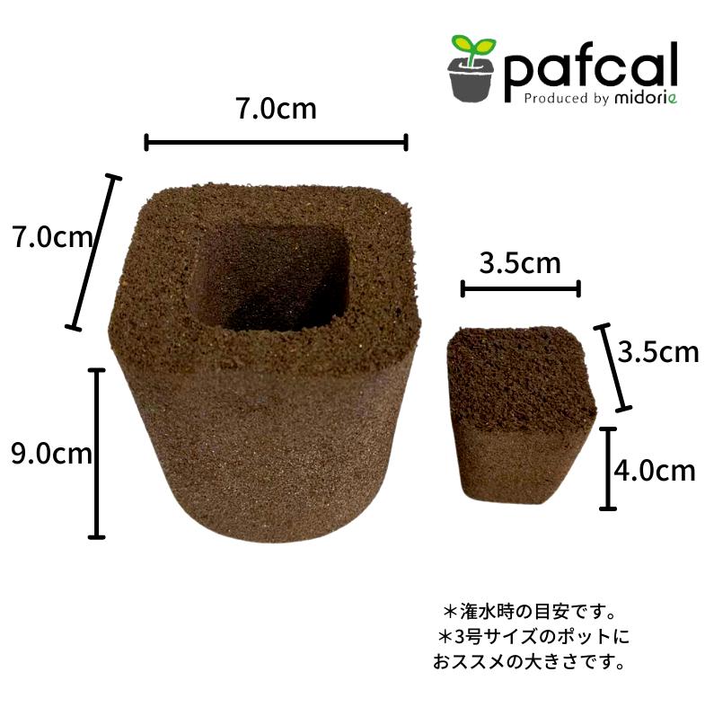 当店限定: 大きく育てるシリーズ ぐんぐんセット 観葉植物 専用  ミニパフカルx3号パフカル 5個セット