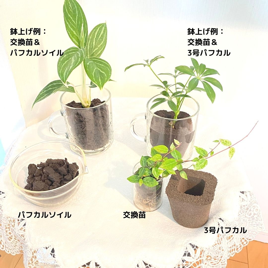 室内向け 植え替え 寄せ植え パフカルソイル 2L
