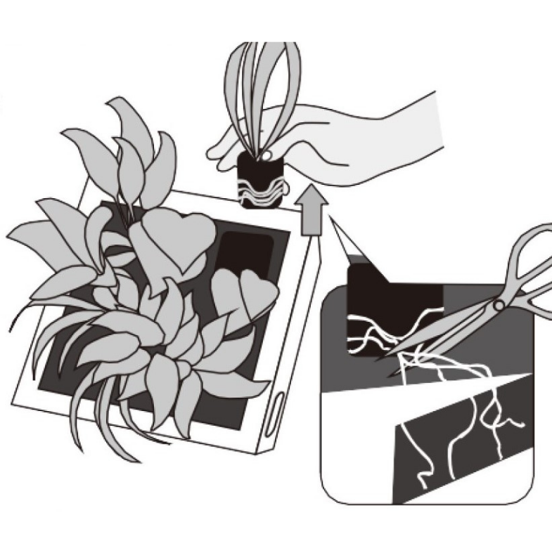 専用の交換苗と合わせて作る マイミドリエ フレーム (ホワイト)