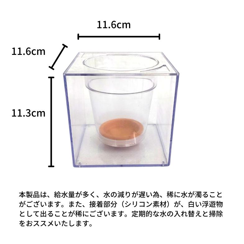 お手入れ簡単 イージーポット 幹太パキラ 底面給水ポット Gシリーズ 03