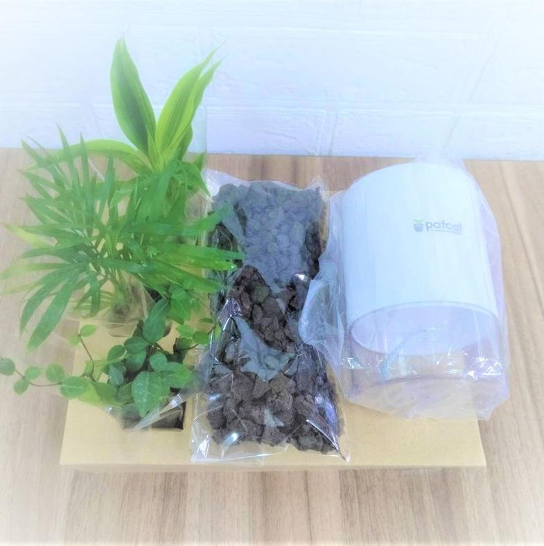 イージーポット 3苗寄せ植え 底面給水ロゴポット Dシリーズ 304