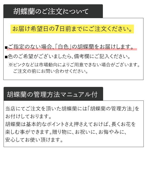 胡蝶蘭 白・ピンク 3本立ち [お届け可能エリア:豊橋市・浜松市]