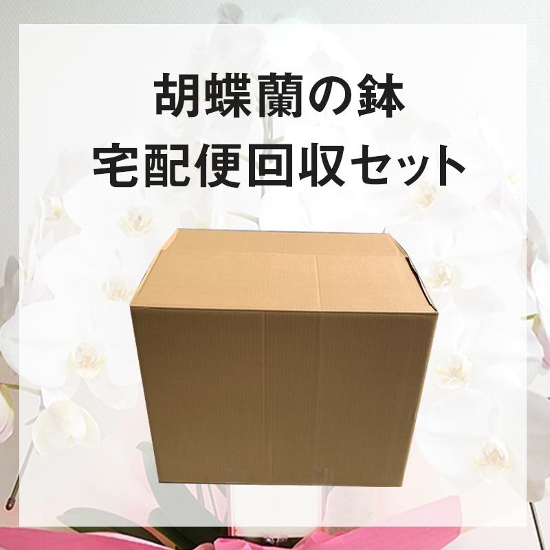 胡蝶蘭の鉢宅配回収セット