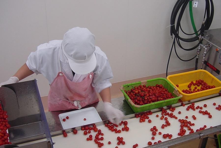 プレサドール トマト3本セット