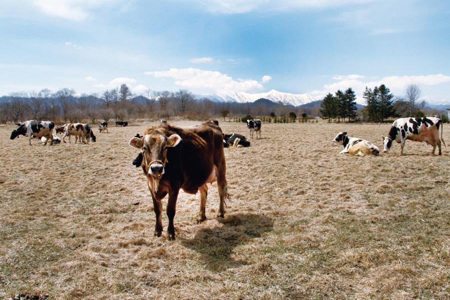 ブラウンスイスの牛肉 スロウお試しセット