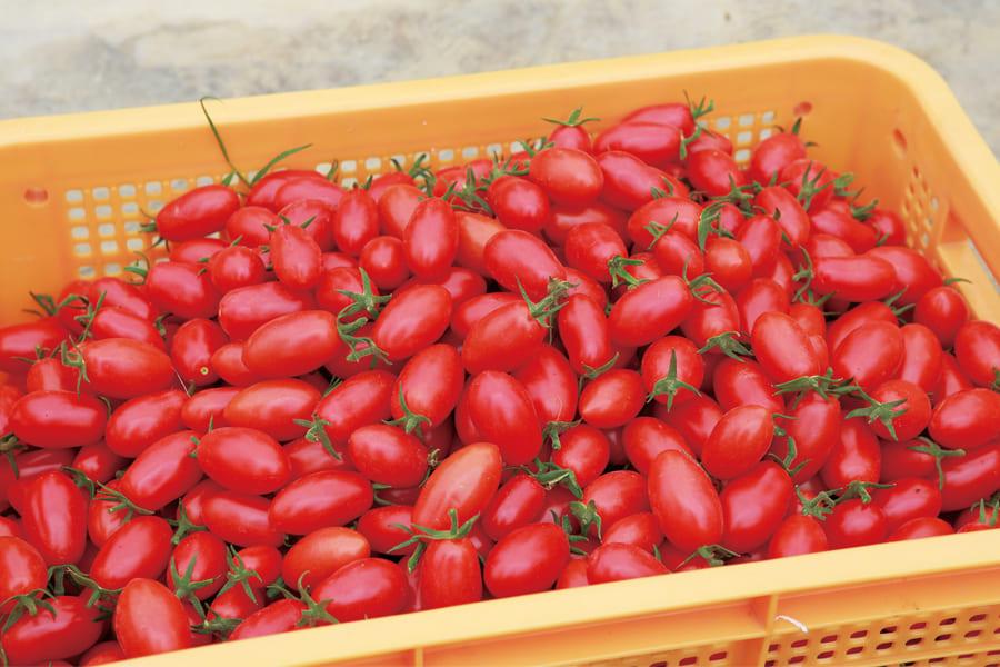 トマトジュースとゼリー、とうもろこしのピューレのセット【岡本農園】