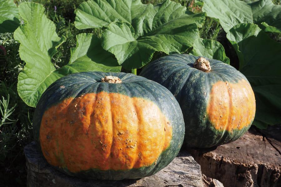 かぼちゃのペーストのセット