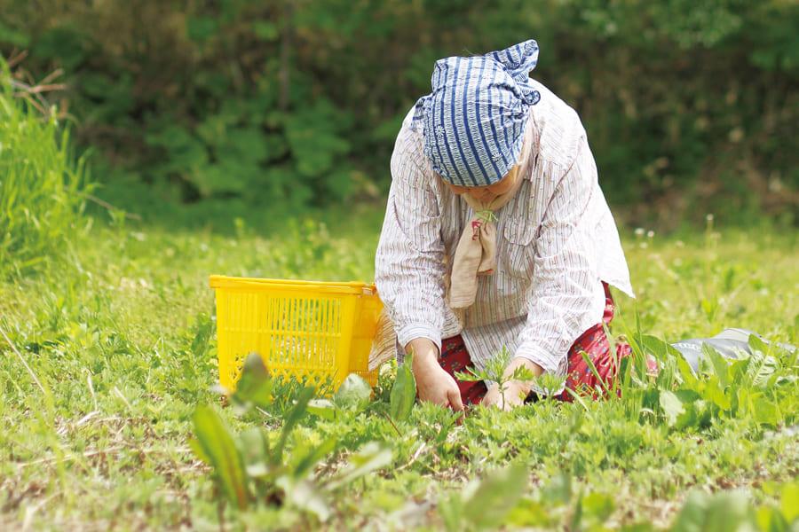 野草茶7種【green樹】