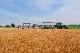 【限定20セット】北海道小麦キャンプ開催記念『小麦セット』
