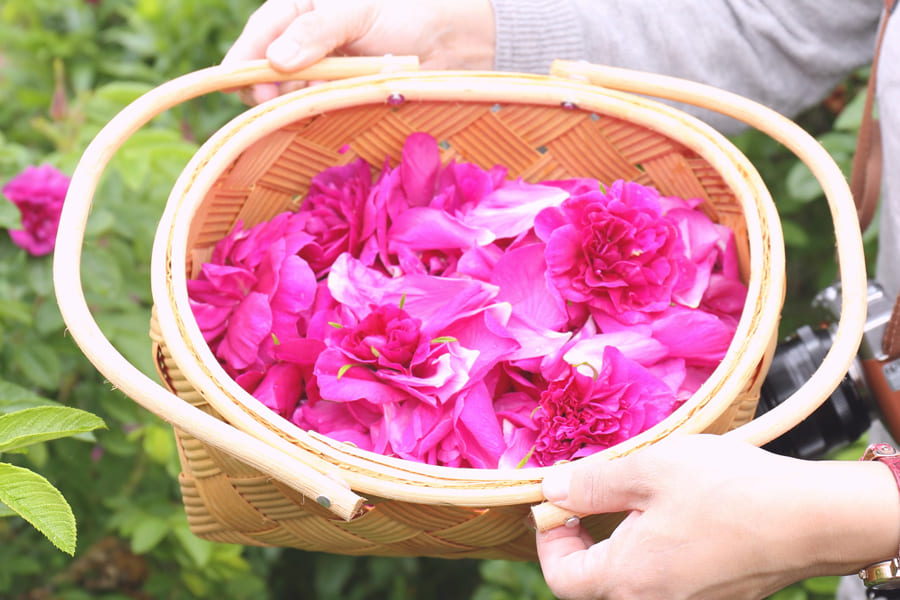 rosa・rugosa ハンドクリーム