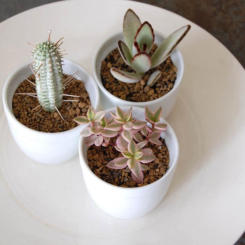 鉢(pudding pot プディングポット)