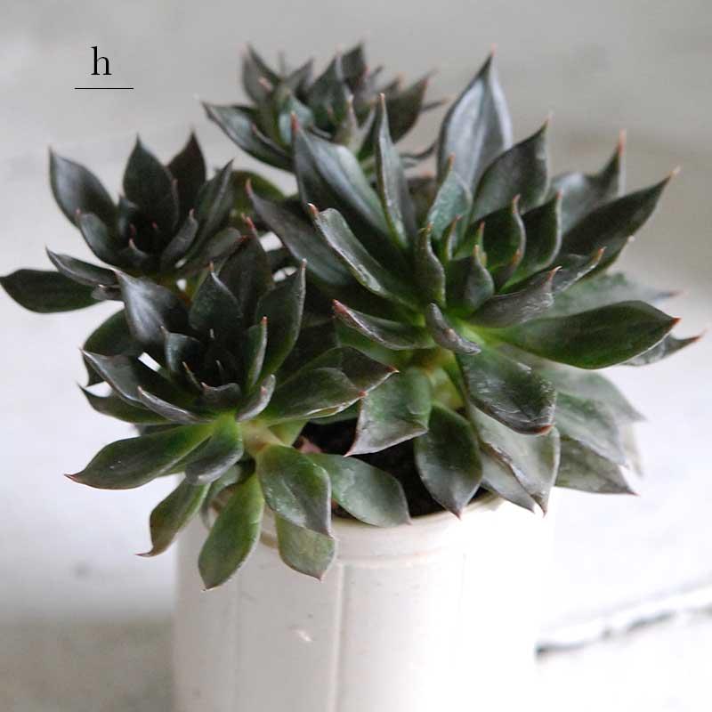 多肉植物(グリーン) x イギリスジャー