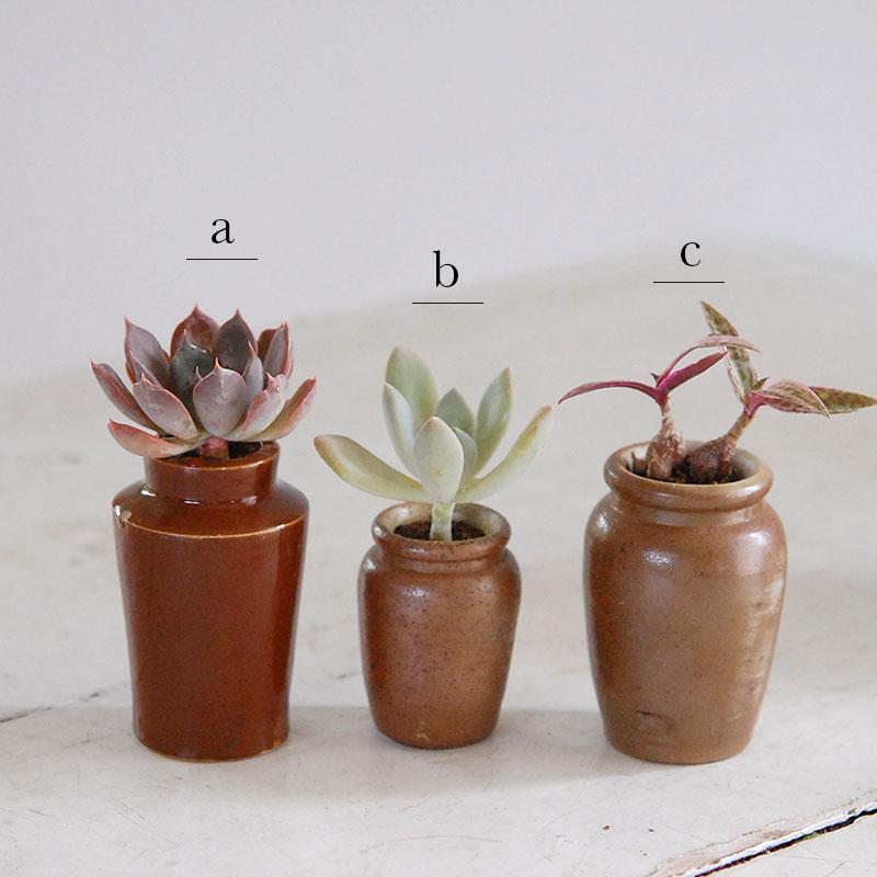 多肉植物 x ブラウンポット