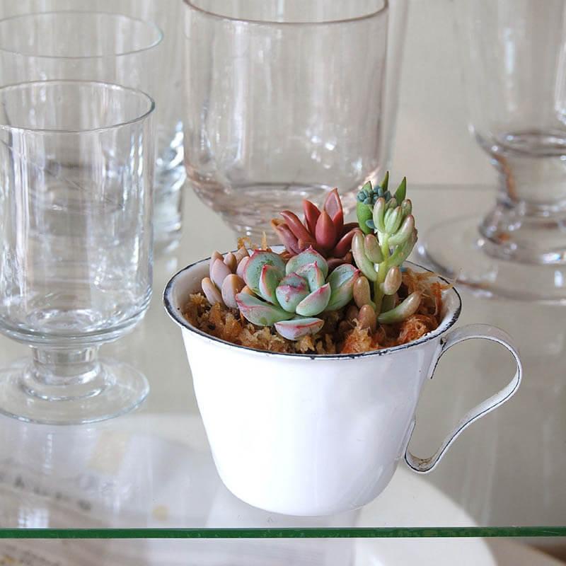 多肉植物寄せ植え× ホーローマグカップ