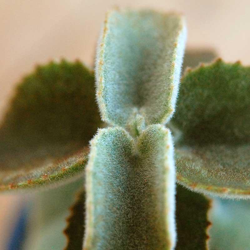 べハレンシス x マットポットm(ブラック)