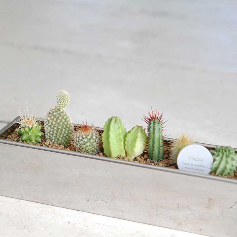 【送料無料】サボテンの寄せ植え x ステンレスポット(深鉢)