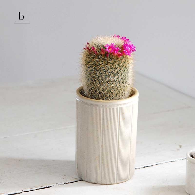花サボテン x イギリスジャー