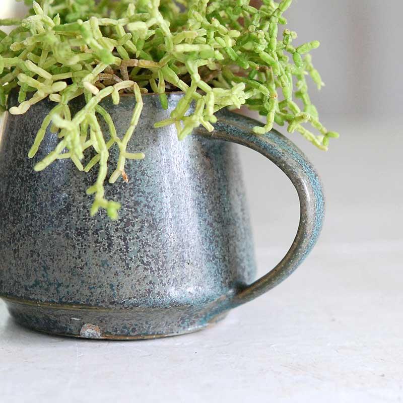 多肉植物 x 渡邉由紀さんの器(緑マグ)