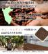 カカオニブ 大容量500g ローストタイプ ペルー産 カカオ チップ ポリフェノール チョコレート 無添加 無着色 スーパーフード 業務用 美容 栄養 サプリ 【メール便送料無料】
