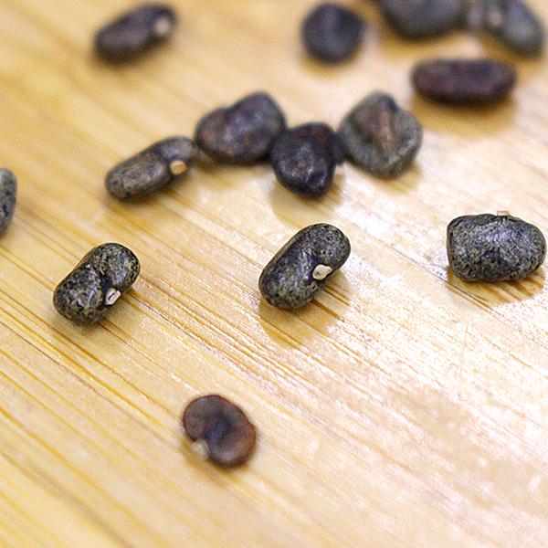 バタフライピーの種 20粒