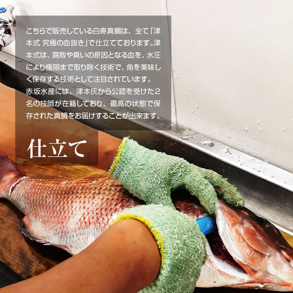 【養殖 白寿真鯛 】重量約1.5~1.6kg 津本式 仕立て師:赤坂竜太郎  愛媛県から発送<br>津本式 血抜き 雑誌 鮮魚