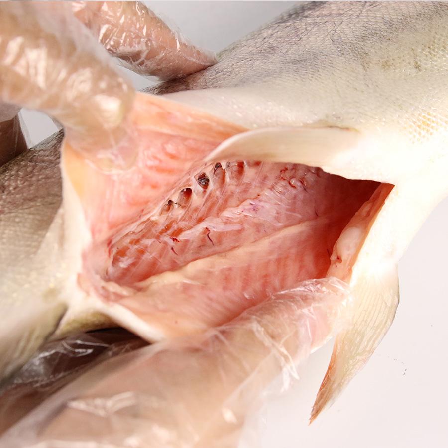 【養殖 西米良サーモン 】重量約2.0~2.5kg×2尾入り 津本光弘本人仕立て究極の血抜き 宮崎県から発送