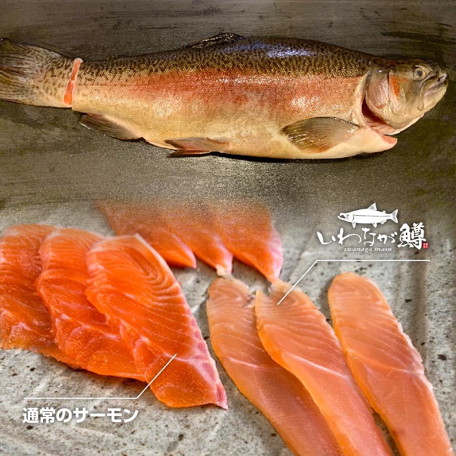 【養殖 いわなが鱒】重量約1.5~2.0kg×2尾入り 津本光弘本人仕立て究極の血抜き 宮崎県から発送