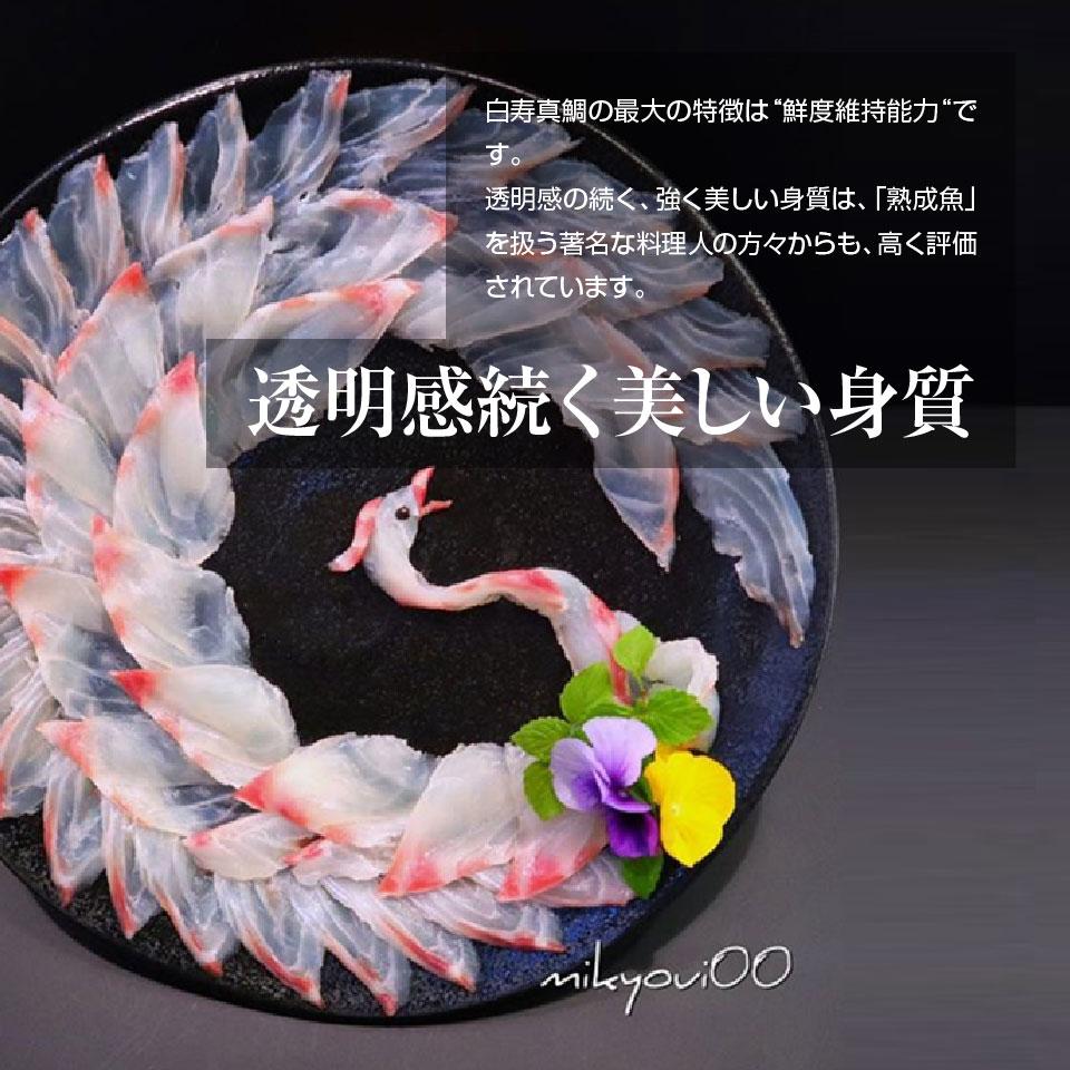 【養殖 白寿真鯛 】重量約1.5~1.6kg×2尾 津本式 仕立て師:赤坂竜太郎<br> 愛媛県から発送<br>津本式 血抜き 雑誌 鮮魚