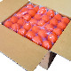 オレンジ/イエロー/ホワイト【送料無料】ラクロス ボール 10ダース(120個)売り 3カラー展開【NOCSAE公認:刻印入り】/スポーツダイレクトジャパン(SPORTS DIRECT)