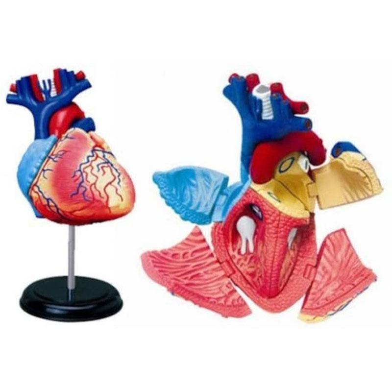 アオシマ 4D VISION 立体パズル No.10 人体解剖モデル 心臓解剖モデル