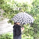 SUR MER(シュールメール) キャンバス水玉模様  晴雨兼用傘折りたたみ傘