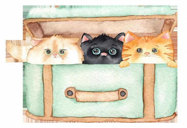 Kittens こねこちゃん